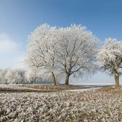 Frost covering trees and a grassy field in Bradford West Gwillimbury